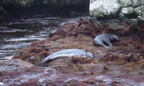 A sleeping leopard seal and an unrelaxed sea lion